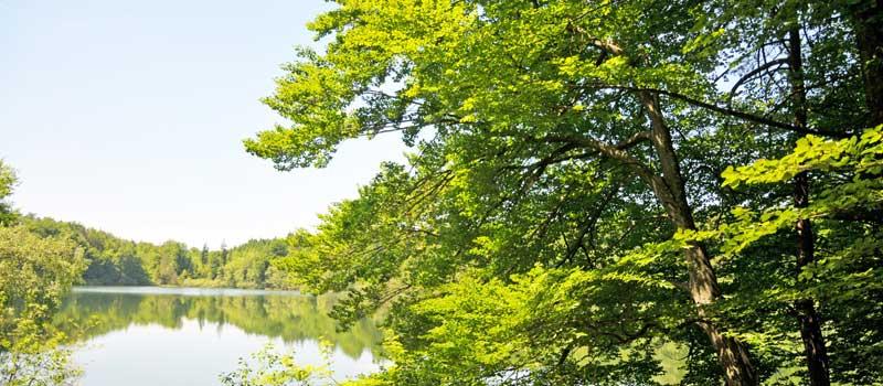Holzpellets und die Umwelt